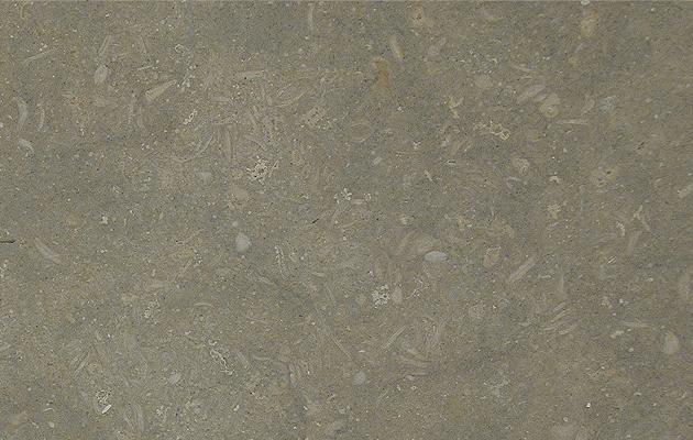 pewter-fossil-limestone